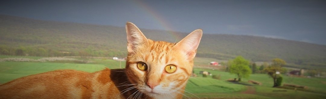 April 2013 Rainbow Cat