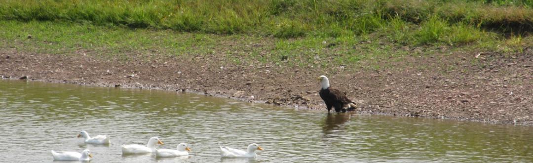 eagle slider